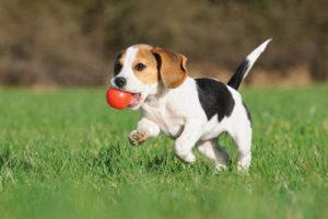 Durante la etapa de impronta el cachorro debe experimentar y aprender a gestionar situaciones
