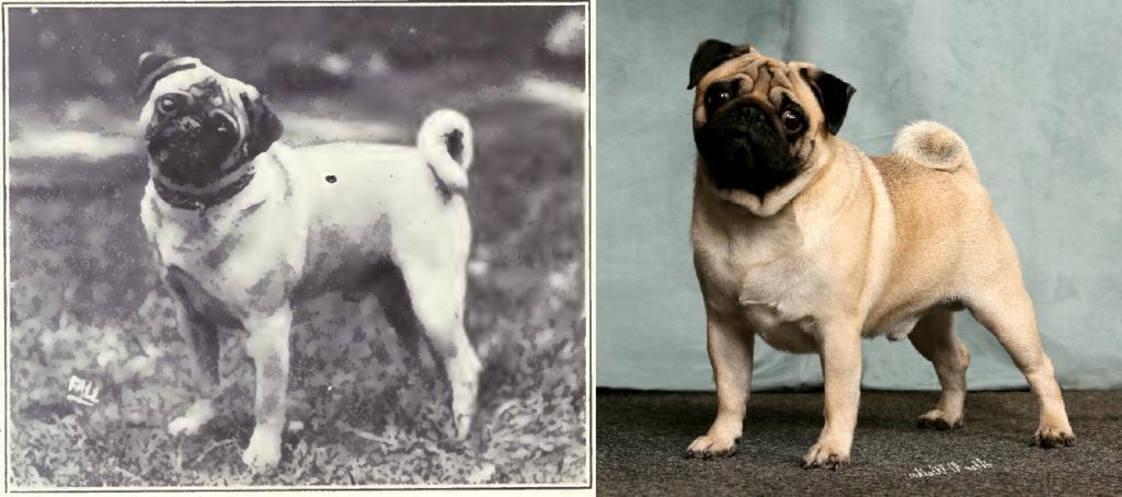Carlino de 1915 y 2015