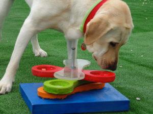Labrador resolviendo juego