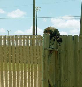 Perro saltando valla para escapar de petardos