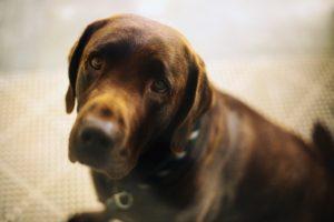 Perro con mirada apaciguante