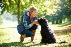 Nuestros perros interpretan nuestras señales sociales