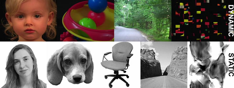 Ejemplos de Vídeos e Imágenes mostrados en máquina de RMf