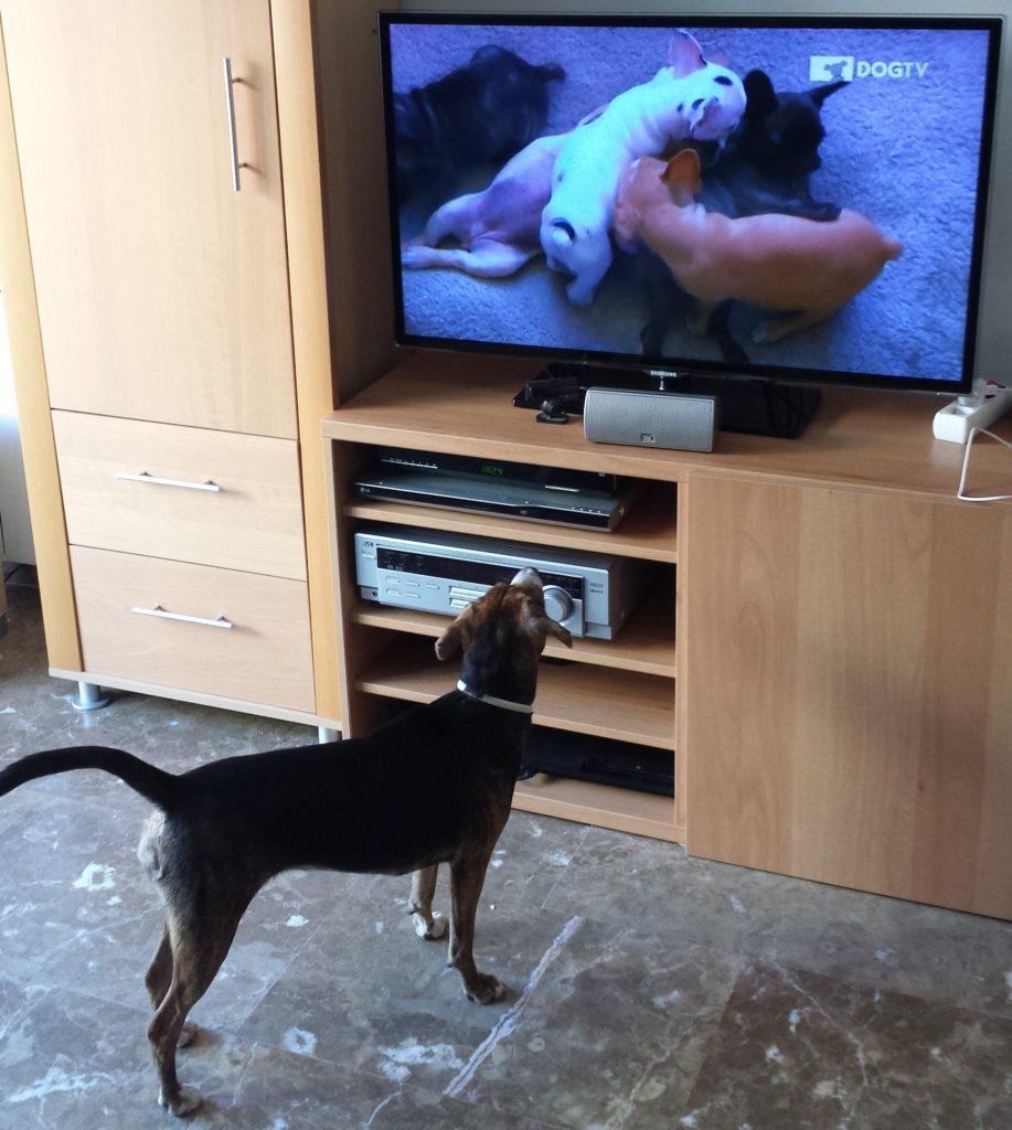 Pippa disfrutando entretenida de DOGTV