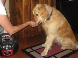 Desensibilización de perro adulto: primeras fases con grabaciones de petardos