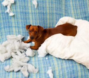 1 de cada 5 perros sufren de ansiedad por separación