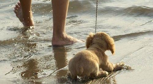 Perro con miedo al agua del mar