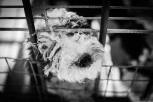 Cachorro en jaula